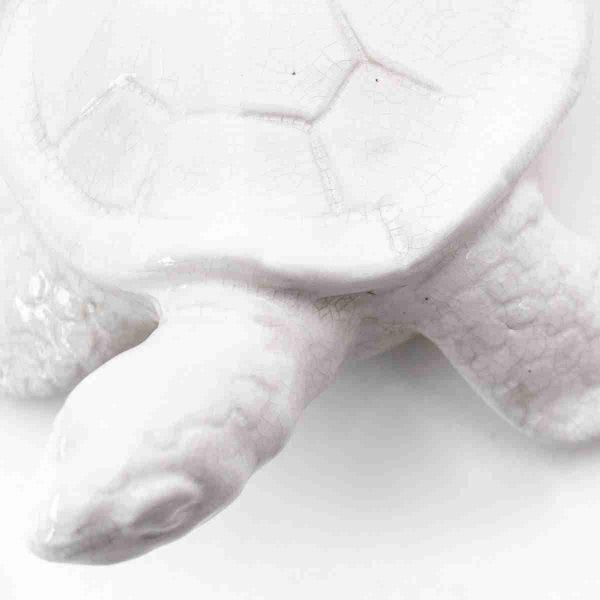 scultura in ceramica tartaruga noleggio props dettaglio
