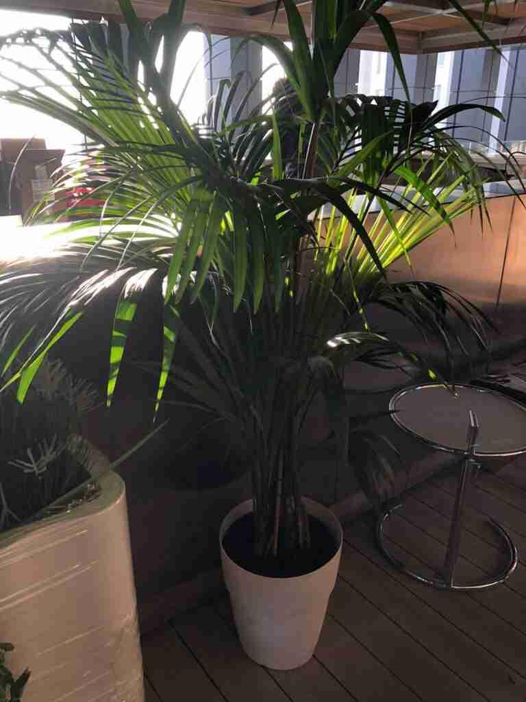 noleggio piante arredi e tavolini per shooting spot tv rooftop rental design 2