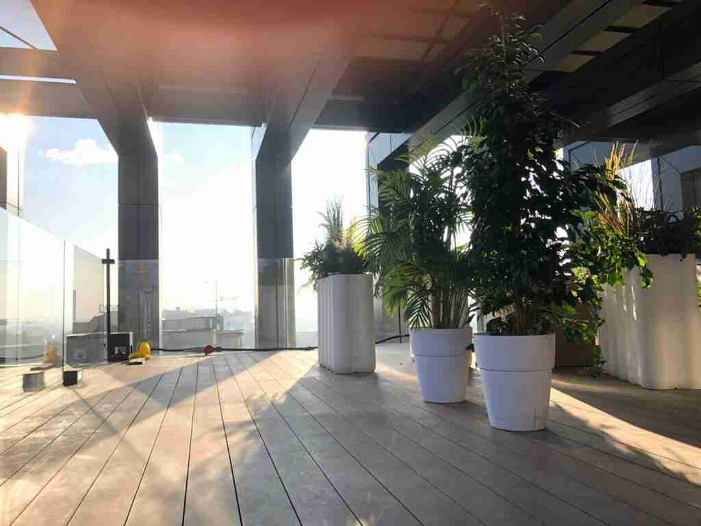 noleggio piante per shooting spot tv rental design 2
